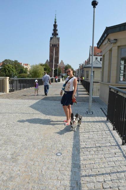 elbląg, pies w podróży, w podróży z psem, podróżowanie z psem, welsh corgi, welsh corgi cardigan, cardigan, biba, miasto, w mieście z psem