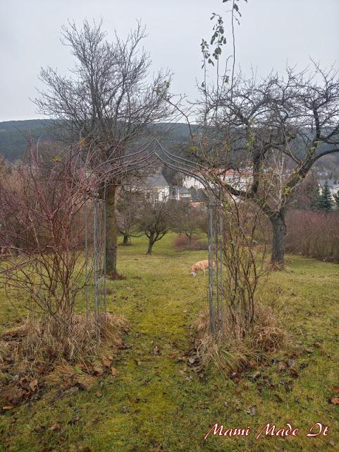Rosenbogen - Rose arch