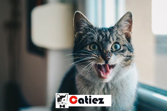 cat teeth - How to Save Your Cat's Teeth