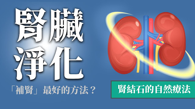 腎臟淨化&排毒:腎結石治療?