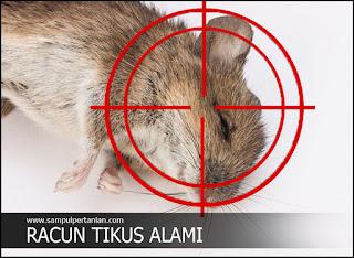 Pengendalian Tikus dengan racun tikus alami (Pestisida Nabati)