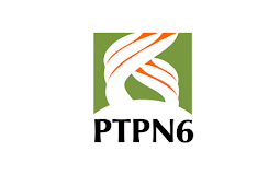 Lowongan Kerja PT Perkebunan Nusantara VI Februari 2021