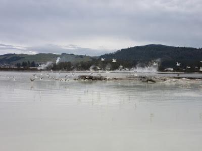 Lago Rotorua, Nueva Zelanda