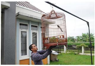 Menjemur burung di gantangan