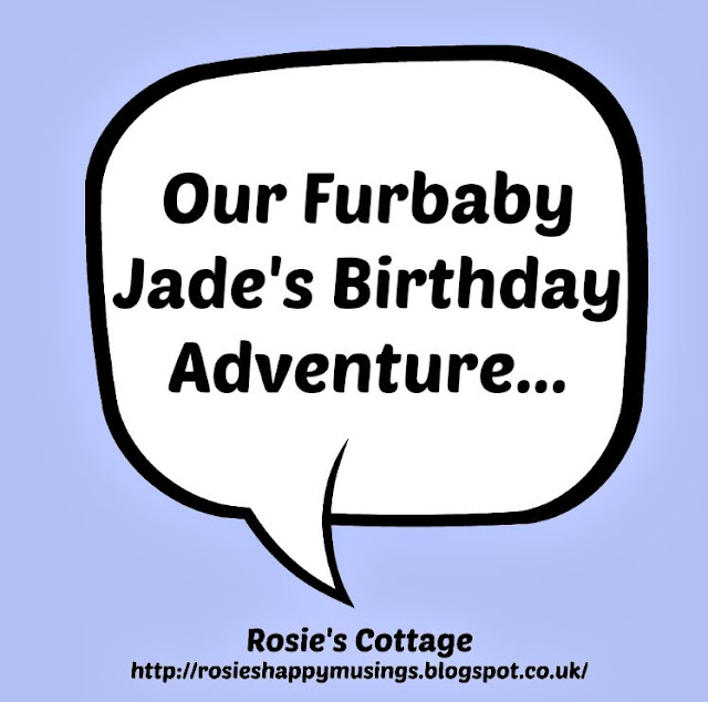 Our Furbaby Jade's Birthday Adventure
