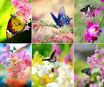 keindahan warna warni