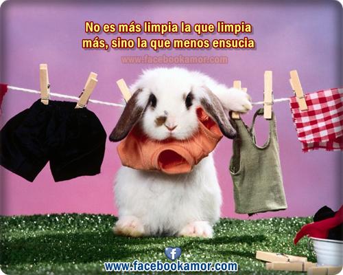 Imagenes De Conejos Animados Para FaceBook