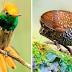 20 pássaros tão perfeitos que não parecem reais