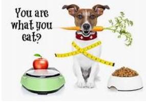Pet харчові добавки-продукти вітамінних виробників для наших вихованців!