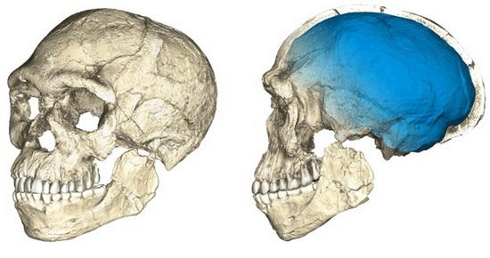 LaporanPenelitian.com Dating Homo sapiens Tertua di Situs Jebel Irhoud di Maroko