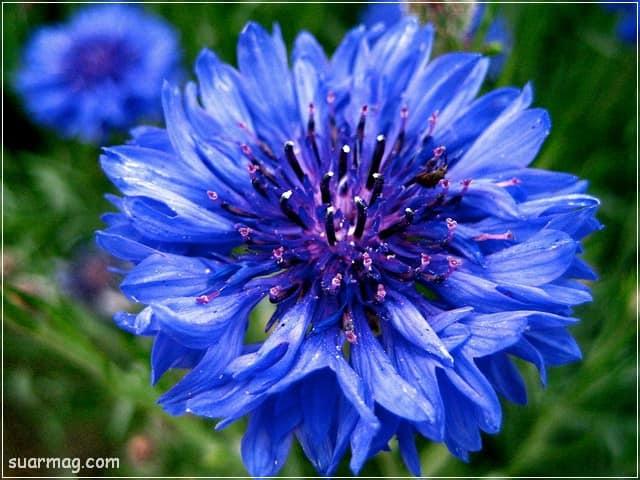 صور ورد - صورة ورد 5 | Flowers Photos - Roses Photo 5