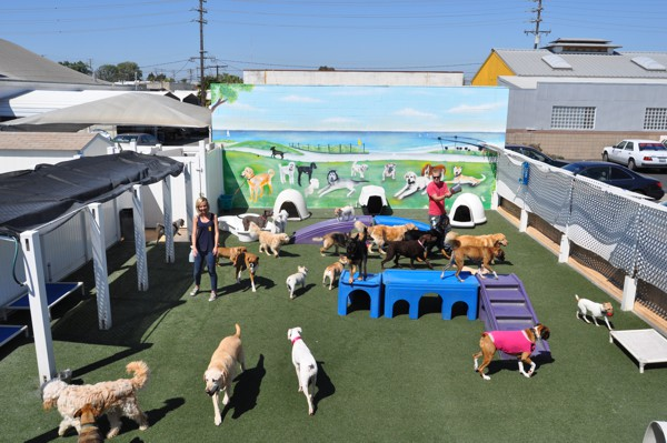 Doggie-daycare-Bone-Home-daycare