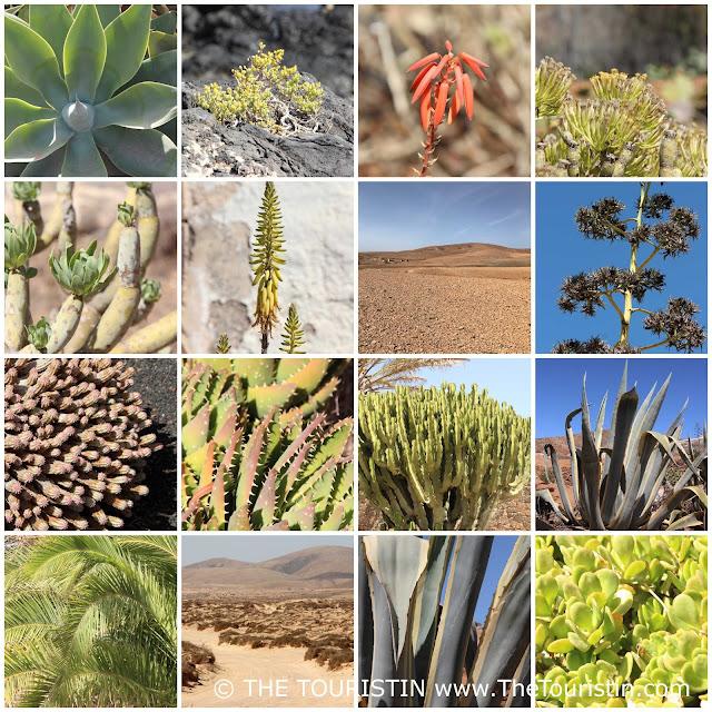 Collection of succulents. Arid landscape.