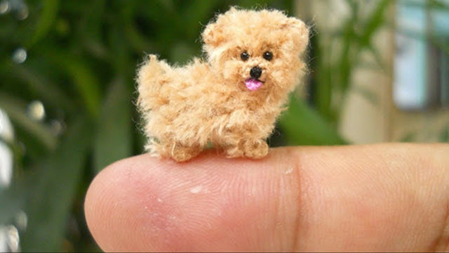 10 of the smallest types of dogs in the world