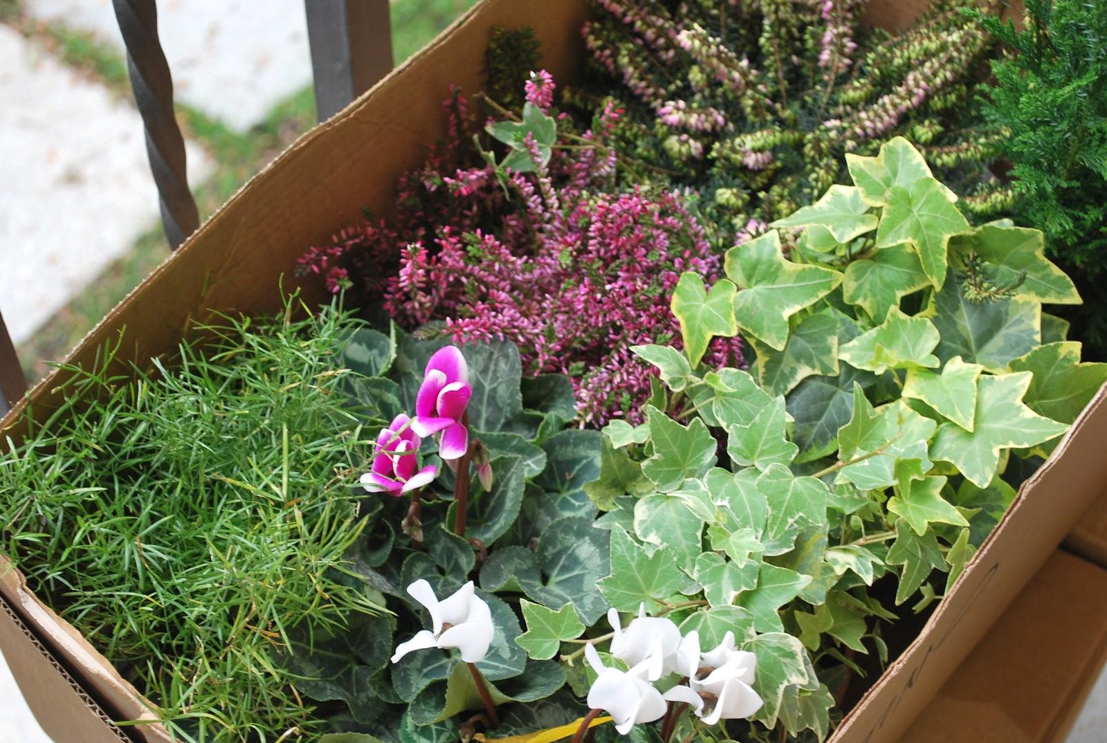 Prima di tutto quali piante scegliere for Tutto per il balcone