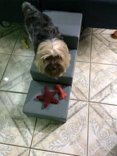 escadinha para cães