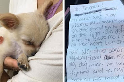 A.b.a.n.d.o.n.e.d Puppy Found Alone At Airport With Note From His Owner Saying She Had No Choice But To Leave Him Behind