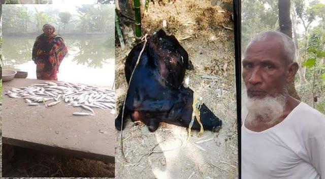 ঝিকরগাছার শংকপুরে মুক্তিযোদ্ধার পুকুরে বিষ প্রয়োগ, মাছ নিধন