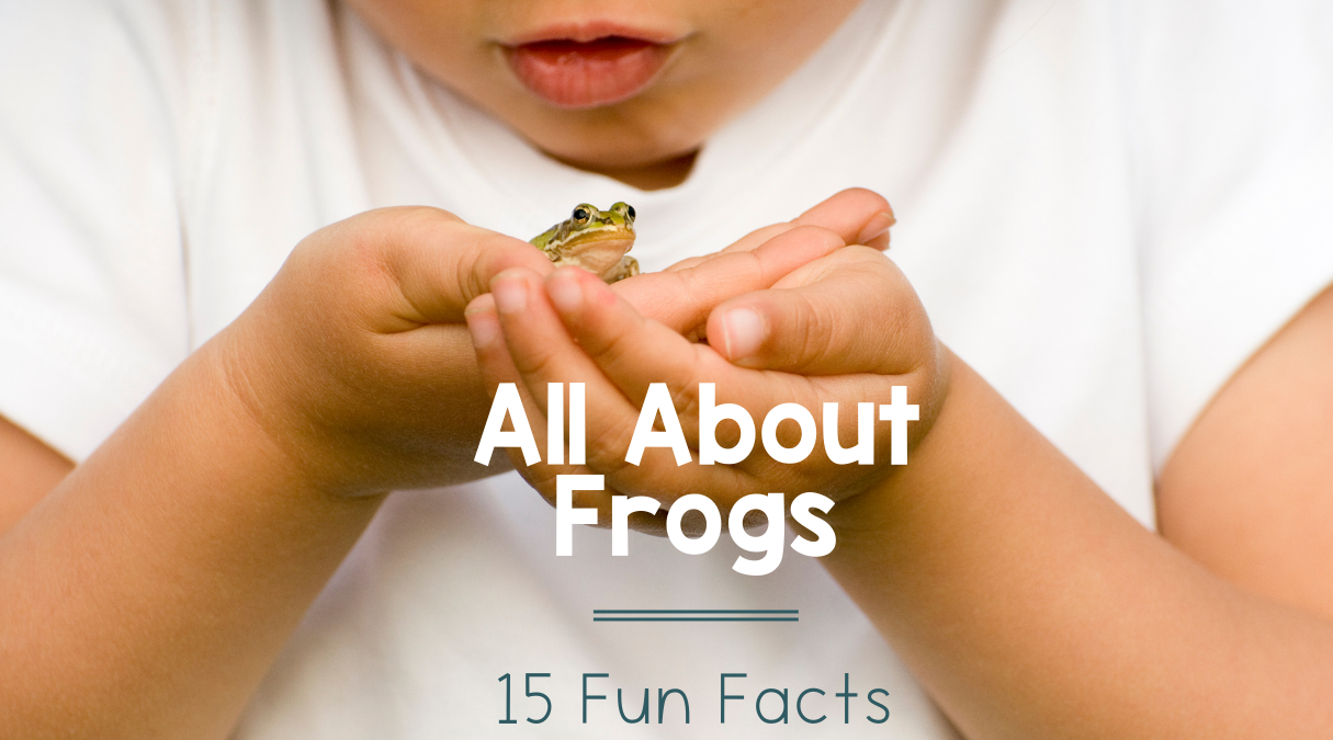 All About Frogs for kids