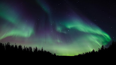 Northen Lights Forest Wallpaper