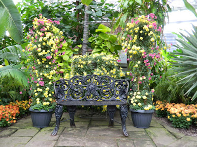 Allan Gardens Conservatory 2015 Chrysanthemum Show bench by garden muses-not another Toronto gardening blog