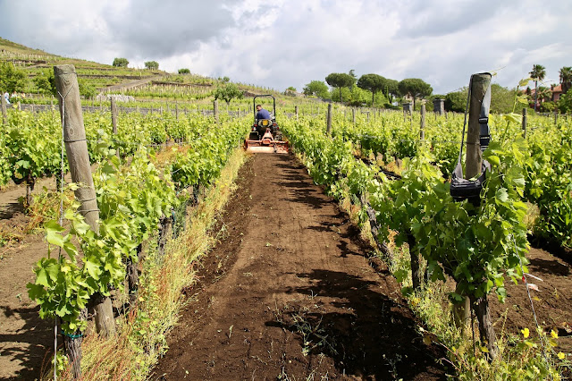 mount Etna wines, Benante winery, Sicily,