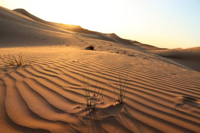 Evening Desert Safari and Sunset in #Dubai #UAE #Youtube #TheLifesWayCaptures