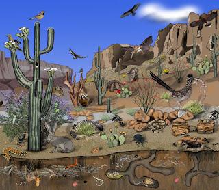 rantai dan jaring makanan dalam sebuah ekosistem