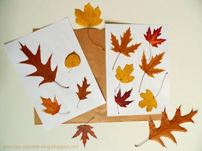 jak zrobić zielnik z liści drzew i krzewów - zdjęcie