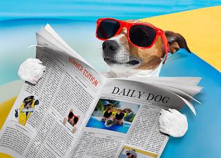 Hesaplı Hayvan Resimleri Online ile ilgili aramalar en ucuz minişler  scottish fold miniş  minişlerin isimleri  minişler koleksiyon  minişler alabaster scottsfold  miniş köpek  lps eski  littlest pet shop koleksiyon seti