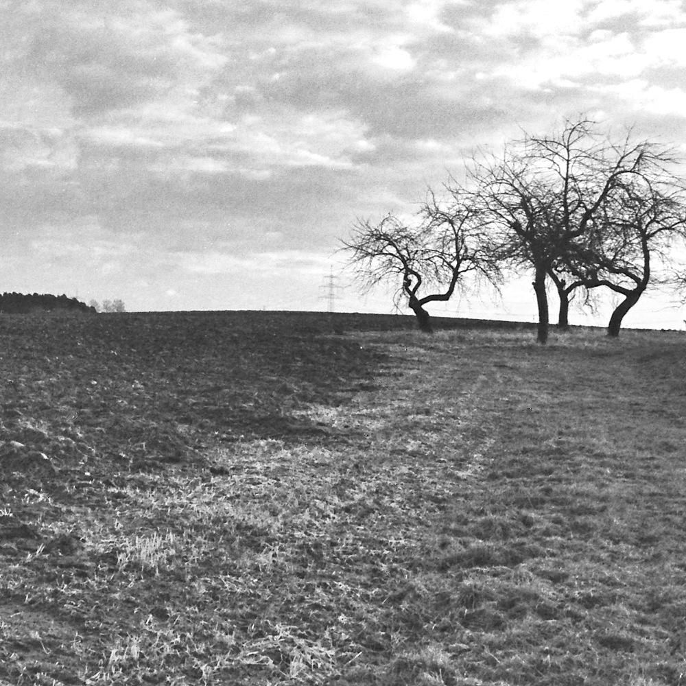 Nackte Apfelbäume vor schütterem Wäldchen über dem Zenngrund