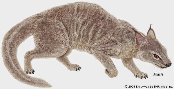 Mundo Pré-Histórico: Miacis, a mãe de todos os Carnívoros