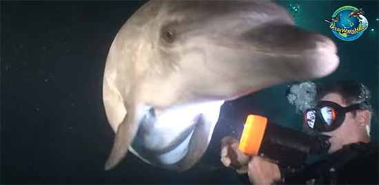 Mergulhador ajuda golfinho 2