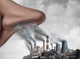 La pollution atteint l'intelligence ?