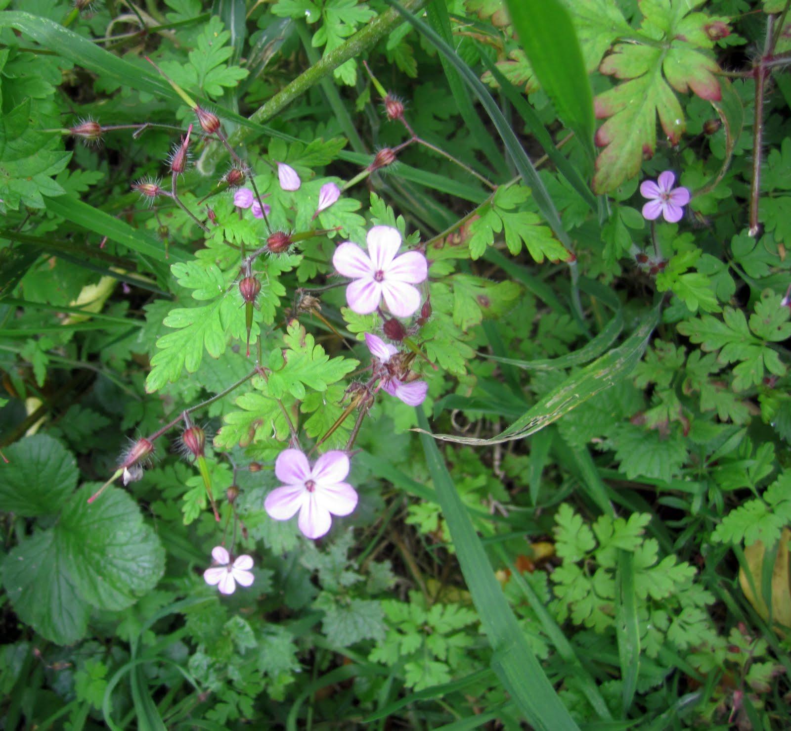 Tales Of A Kitchen Herbwife Herbal Support For Broken Bones