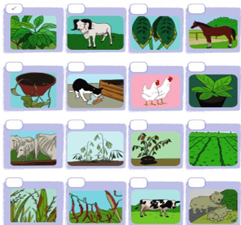 74 Gambar Hewan Dan Tumbuhan Yang Tidak Terawat Terbaru