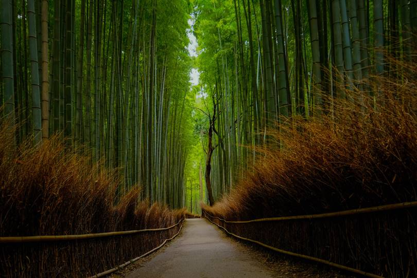 Sagano Bamboo Forest is located in the western region of Kyoto - Arashiyama, famous for the beauty of nature since the time of Heian (9-11 century)