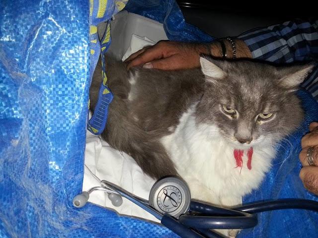 В Италии кот пролежал 33 дня под завалами после землетрясения