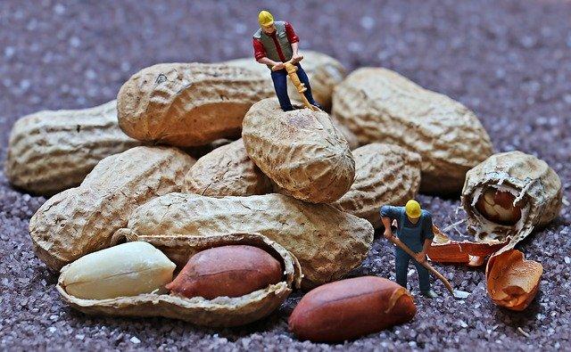 Apa yang Anda ketahui tentang alergi kacang tanah?