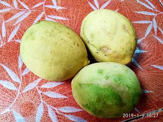 Antara Jeruk Lemon dan Jeruk Nipis Beda Tipis Kaya Manfaat