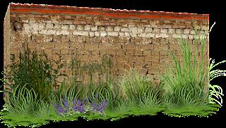 pared,muro,png,medianera,enredadera,plantas,recursos,arquitectura,photoscape,photoshop,gimp,scrap