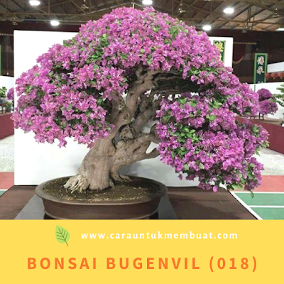 Bonsai Bugenvil (018)