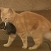 Γάτα Υιοθετεί κουνέλάκι