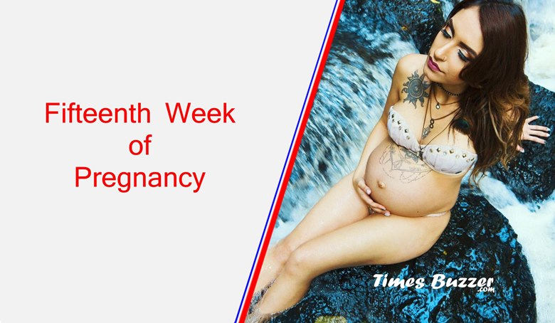 Fifteenth Week of Pregnancy