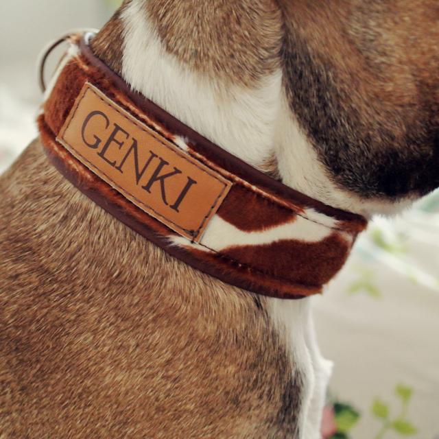 Französische Bulldogge Namenshalsband