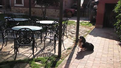 hotel mascotas cuenca