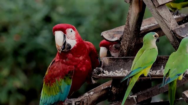 Observação de aves - Bonito MS  [Foto: Programa Tudo de Bom SBT Maranhão]