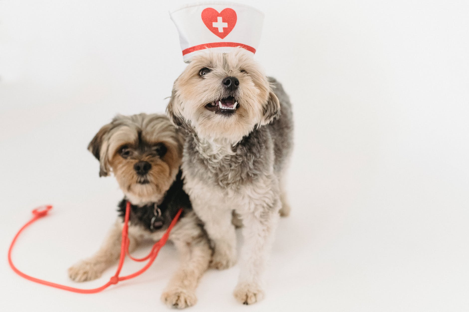 Que devrait avoir une trousse d'urgence pour chiens?