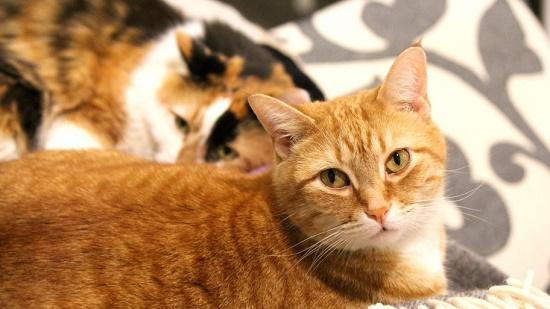 cara mengatasi kucing rabies