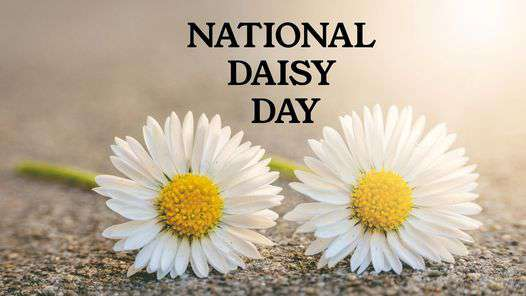 National Daisy Day Wishes